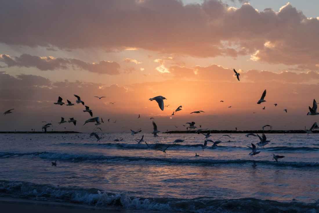 flock of white birds photo during sunset