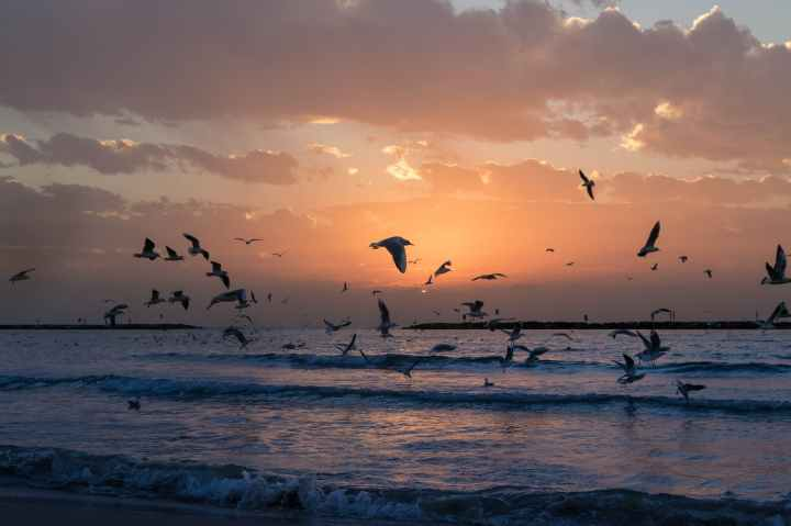 flock of white birds photo during sunset