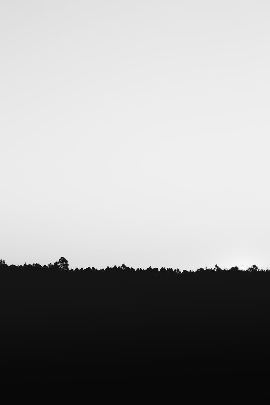 silhouette of grass under white sky