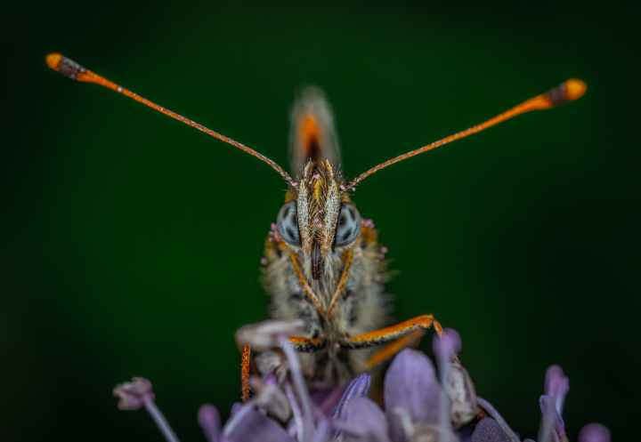 shallow focus photo of gray and orange insect