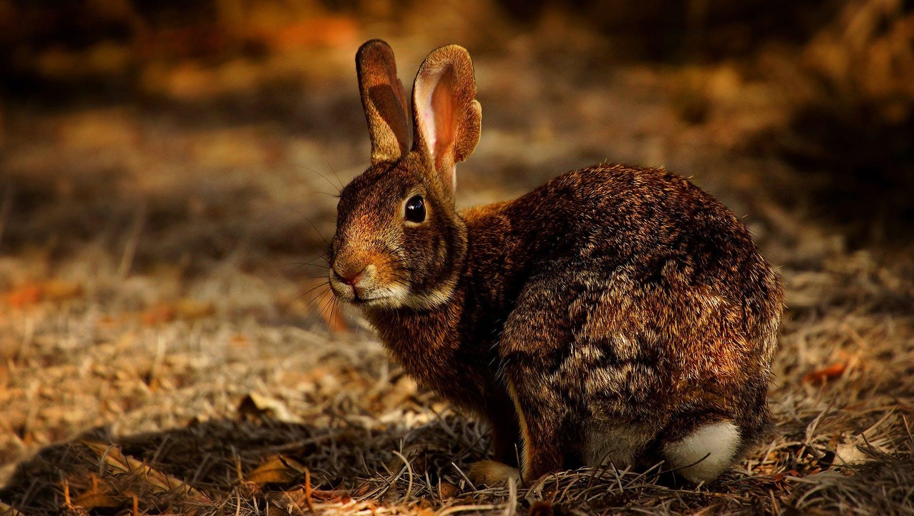 close up photo of rabbit